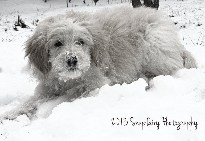 Chloe.snow.bw.snp