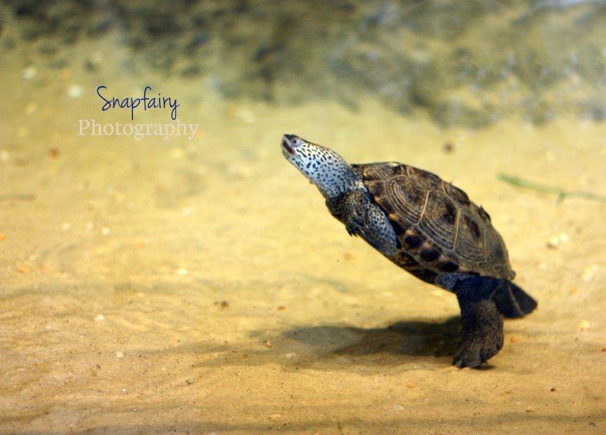 a.walking.turtle.snp