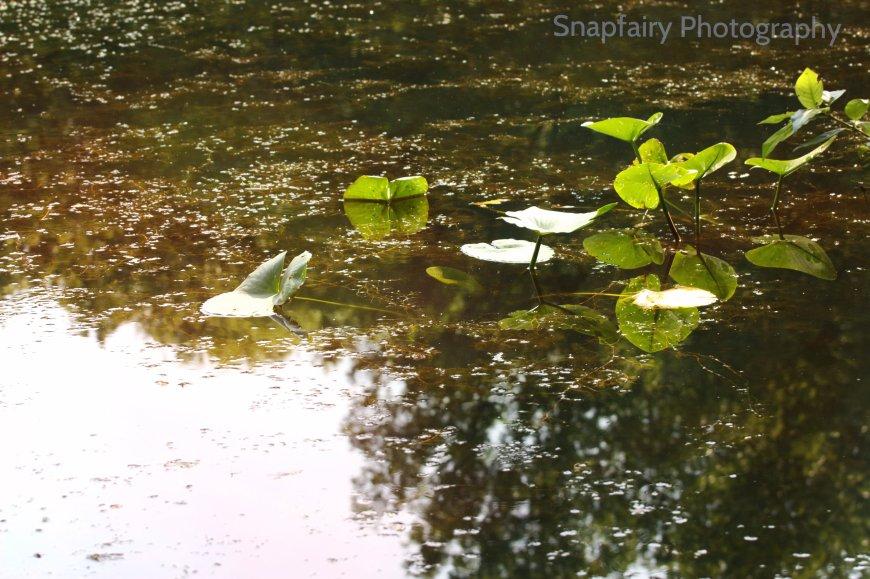 reflection.snp